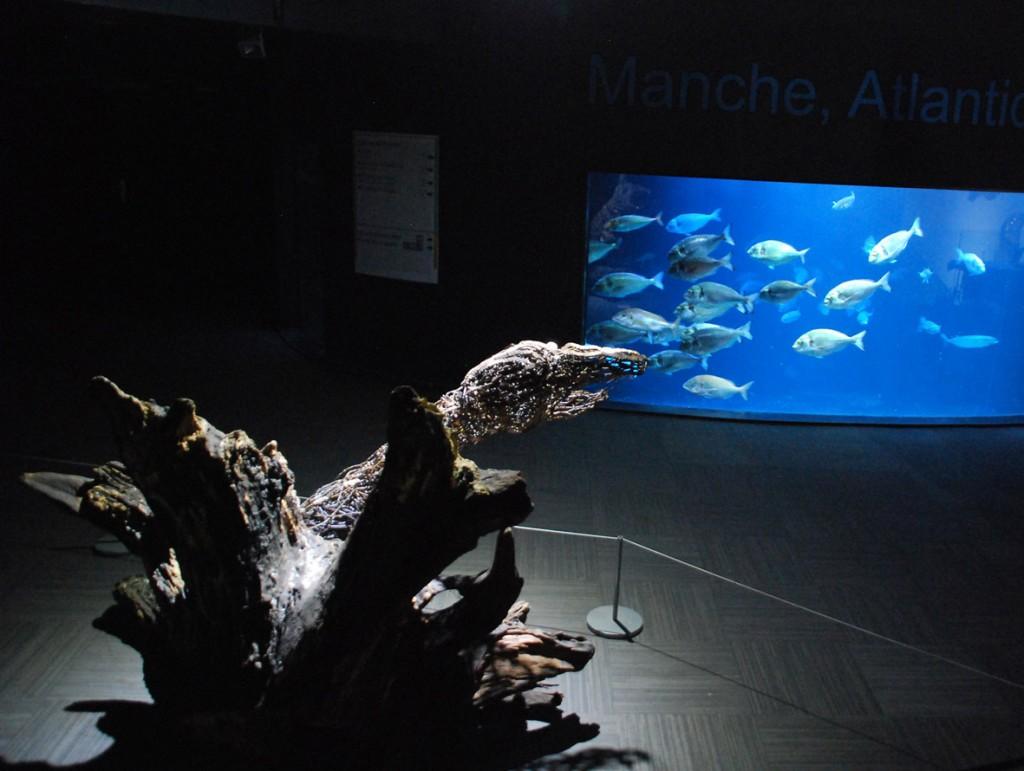 Sabatté à l'Aquarium de Paris